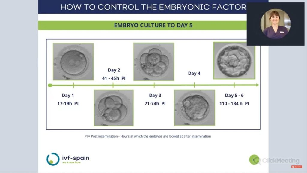Embryo culture to day 5 - IVF-Spain
